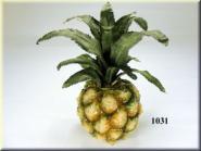 Zier-Ananas