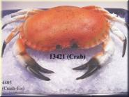 Krabbe groß