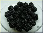 Brombeere schwarz, gross (24 St.)