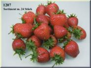 Erdbeer-Sortiment ( 24 Stück)