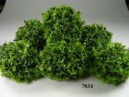 parsley  (36 pieces)