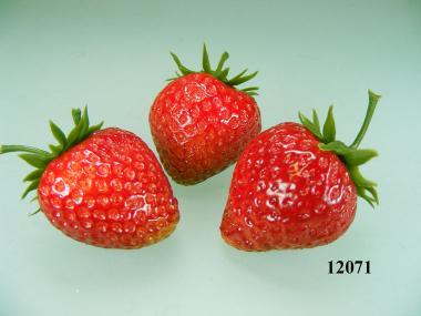 Erdbeeren ( 3 Stück) aus Sort. 1207