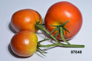Deko Gem/üse 3 Tomaten am Strauch 40-60 mm